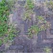 インターロッキングブロックの防草