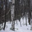 スノーシュー in 豊滝市民の森