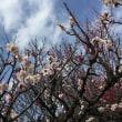 岐阜梅林公園 梅まつり 2018.3.11