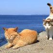 九州E島の猫たち 2018年4月 その8