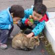 駅舎の猫 愛おしむ子ら可愛くて