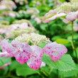 梅雨の晴れ間のはずが・・・(赤塚植物園)