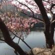 菜の花~河津桜~・・・春を感じる旅をしました。