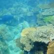 深島ダイビング 2017