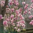 春の花はいろいろ