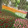 渋滞からの…最高の花・花