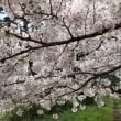 春 四ツ谷