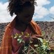 戦争と平和の三国志。。高野秀行氏「謎の独立国家ソマリランド」