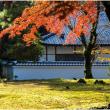 紅葉と苔(南禅寺)