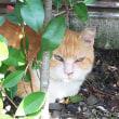 明日1月14日(日)は今年最初の「猫の譲渡会」です