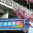 「河津桜まつり」/三浦海岸駅前