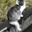 今日のペルシャ猫さん小雨模様