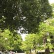 タケノコと木の芽味噌♪