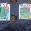 小松なと葉大根を蒔きました(*^^)v