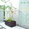 季を績(つむぐ)庭 tsumu + niwa