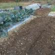 年初の畑仕事を開始。