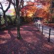 晴天下の紅葉