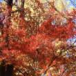 紅葉とクリスマス