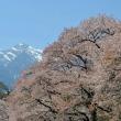 眼前に迫る甲斐駒ケ岳と眞原桜並木。