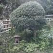 植木の床屋、画像