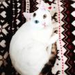 ゴミ置き場で発見された瀕死の子猫