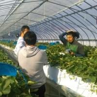 亘理名取地区農村青少年クラブが先進地研修会(北海道)を開催しました。