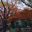 紅葉の日比谷公園
