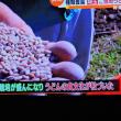 11/17 埼玉 うどん県 小麦が生産できるなら