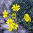 縮景園の10月の花