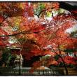 豪徳寺の紅葉