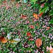 『晩秋の色』 姫蔓蕎麦