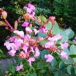 8月19日の花
