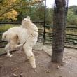 盛岡動物公園に行ってきました。