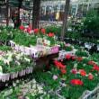 雨の園芸店