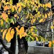『寺社の色』 地福寺