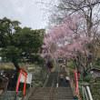 桜.  紀三井寺 道成寺
