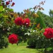 花の会の視察旅行
