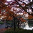 晩秋のご近所散歩