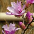早春の草花展 (9)