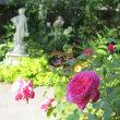 庭のセミ&☆庭のバラ ル・ブランetc