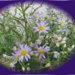 蓮池の花たち