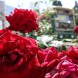 赤いバラに