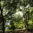自然が創るステンドグラス