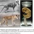 オーストラリアのフクロオオカミは、数千年も前から絶滅の運命!