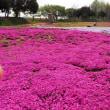 笠岡干拓地の芝桜