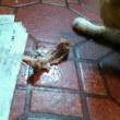 猫は肉食動物、だけどごはんも好き