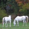 白馬のツーショット