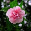 雨で撮る物は、花