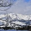 大きな柑橘「ザボン」と雪国の風景