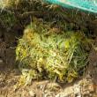 雑草の片づけ